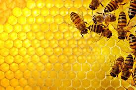 Il miele e… la birra!