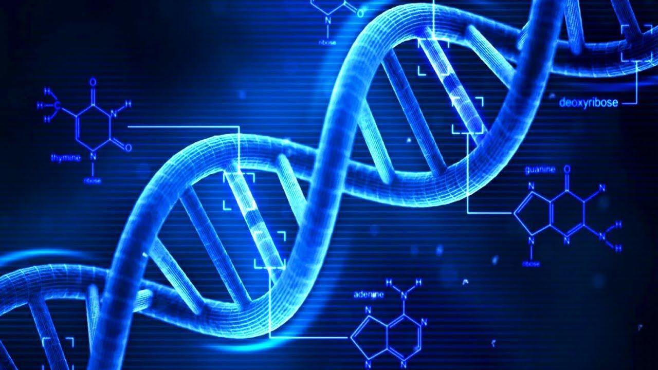 La birra (forse) mantiene giovane il DNA!