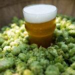 Luppolo e birra: dal Ludi alle Craft