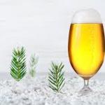 Spruce beer: le birre d'abete